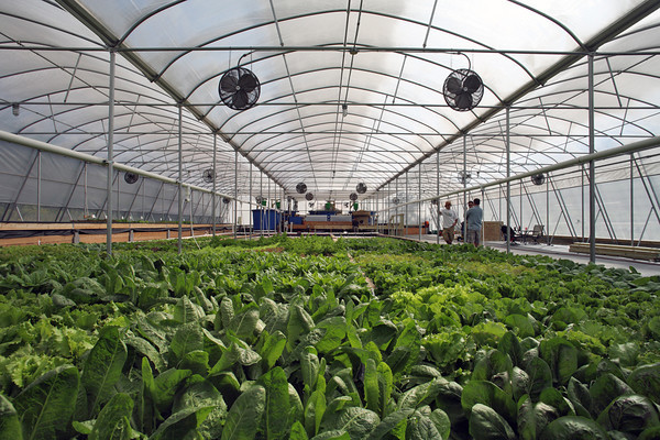 greenhouse technology Greenhouse cultivation has expanded in recent decades with increased demand for horticultural production this book covers current technologies and management.